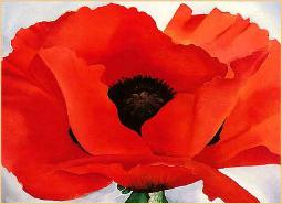 Red Poppy, Remembrance Day,